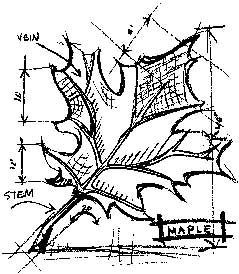 Tim Holtz Rubber Stamp MAPLE SKETCH Stampers Anonymous P1-1940 Preview Image