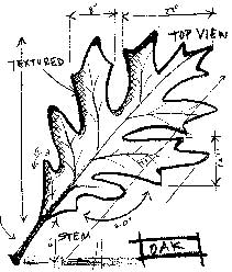 Tim Holtz Rubber Stamp OAK SKETCH Stampers Anonymous P1-1941 Preview Image