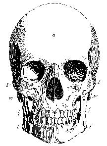 Tim Holtz Rubber Stamp THE SKULL Stampers Anonymous P4-1964