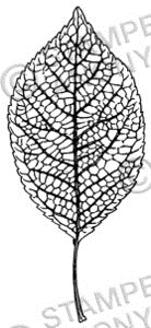 Tim Holtz Rubber Stamp SHORT LEAF Stampers Anonymous J2-2290 Preview Image