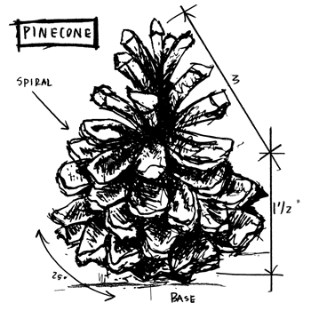 Tim Holtz Rubber Stamp PINECONE SKETCH Stampers Anonymous P1-2417