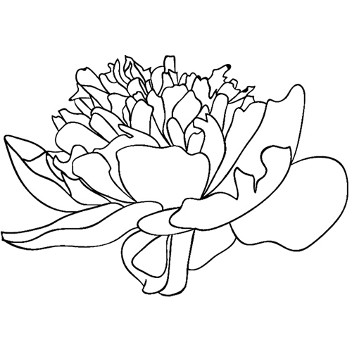 Tim Holtz Rubber Stamp GARDEN FLOWER 4 Stampers Anonymous H2-2548 Preview Image