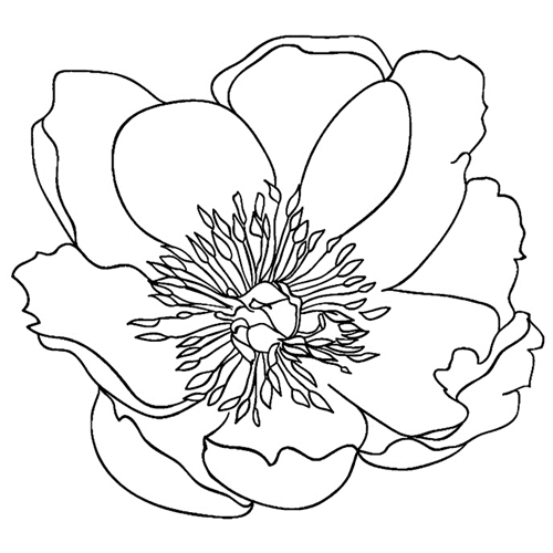 Tim Holtz Rubber Stamp  GARDEN FLOWER 5 Stampers Anonymous H2-2549 Preview Image