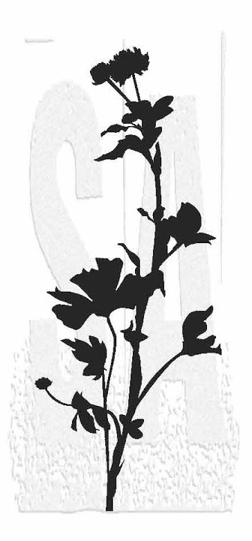 Tim Holtz Rubber Stamp WILDFLOWER 4 Stampers Anonymous P5-2814* zoom image