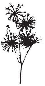 Tim Holtz Rubber Stamp DANDELION Flower Stampers Anonymous K3-1210 Preview Image