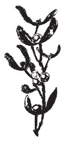 Tim Holtz Rubber Stamp MISTLETOE SPRIG Christmas Stampers Anonymous J5-1187 Preview Image