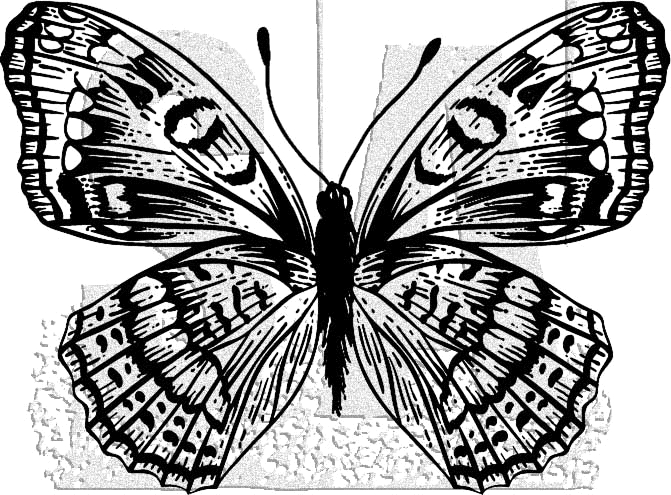 Tim Holtz Rubber Stamp BUTTERFLY 10 Stampers Anonymous J1-2985 zoom image