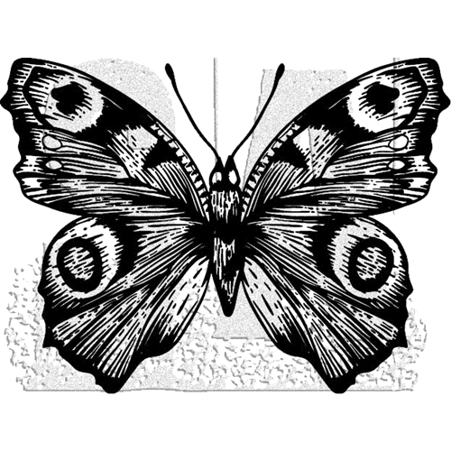 Tim Holtz Rubber Stamp BUTTERFLY 9 Stampers Anonymous J1-2984* Preview Image