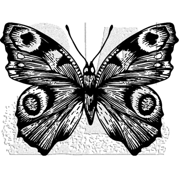 Tim Holtz Rubber Stamp BUTTERFLY 9 Stampers Anonymous J1-2984*