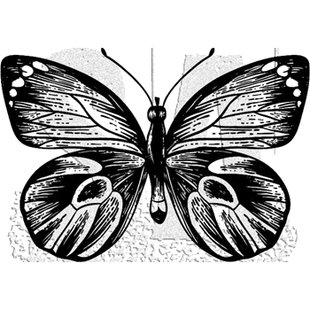 Tim Holtz Rubber Stamp BUTTERFLY 7 Stampers Anonymous J1-2982*