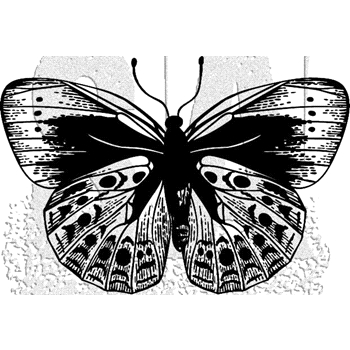 Tim Holtz Rubber Stamp BUTTERFLY 5 Stampers Anonymous J1-2981*