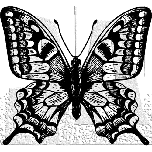 Tim Holtz Rubber Stamp BUTTERFLY 3 Stampers Anonymous H1-2978 Preview Image