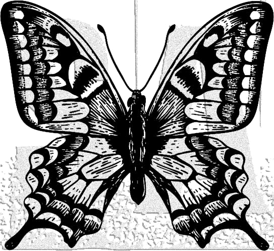 Tim Holtz Rubber Stamp BUTTERFLY 3 Stampers Anonymous H1-2978 zoom image