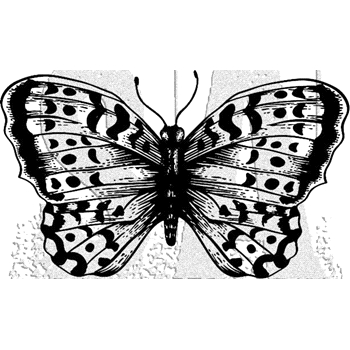 Tim Holtz Rubber Stamp BUTTERFLY 2 Stampers Anonymous G2-2977