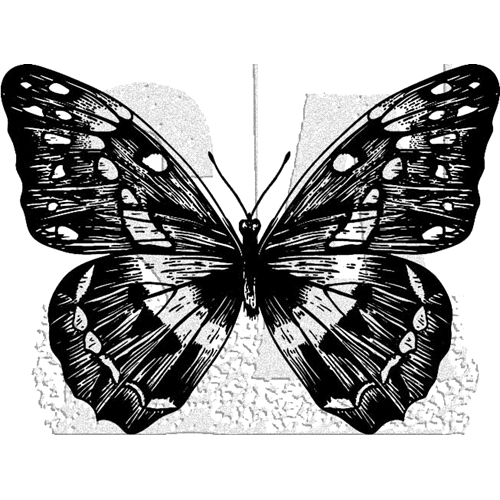 Tim Holtz Rubber Stamp BUTTERFLY 1 Stampers Anonymous J1-2980 Preview Image