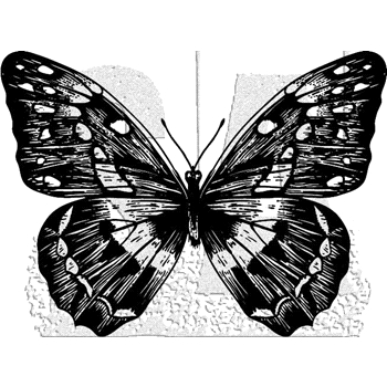 Tim Holtz Rubber Stamp BUTTERFLY 1 Stampers Anonymous J1-2980