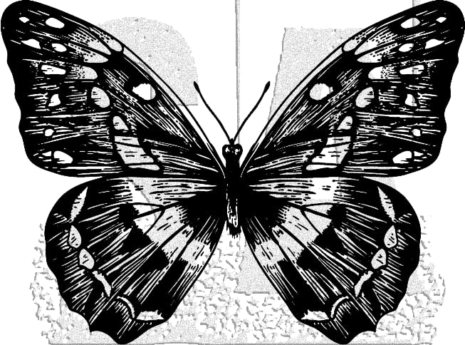 Tim Holtz Rubber Stamp BUTTERFLY 1 Stampers Anonymous J1-2980 zoom image