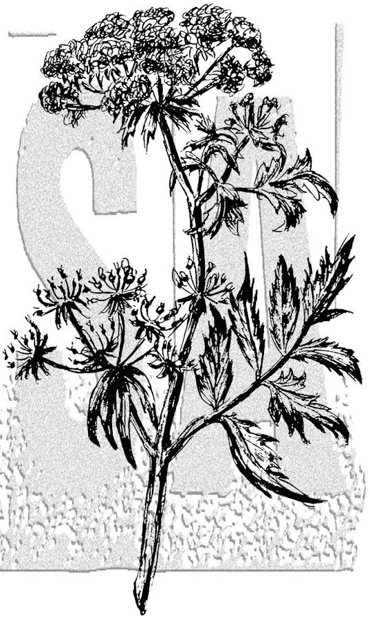 Tim Holtz Rubber Stamp ILLUSTRATED FLOWER 2 Stampers Anonymous P5-2990* zoom image