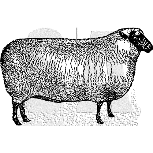 Tim Holtz Rubber Stamp SHEEP Stampers Anonymous J2-3027 Preview Image