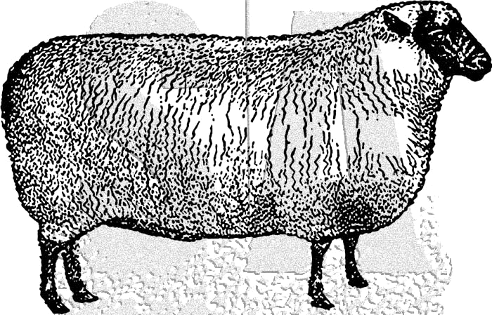 Tim Holtz Rubber Stamp SHEEP Stampers Anonymous J2-3027 zoom image