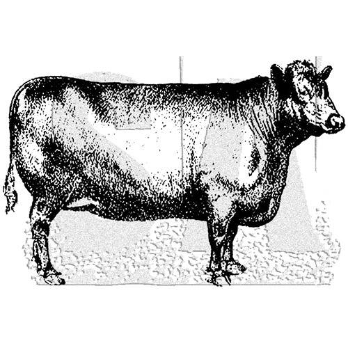 Tim Holtz Rubber Stamp COW Stampers Anonymous M3-3028* Preview Image