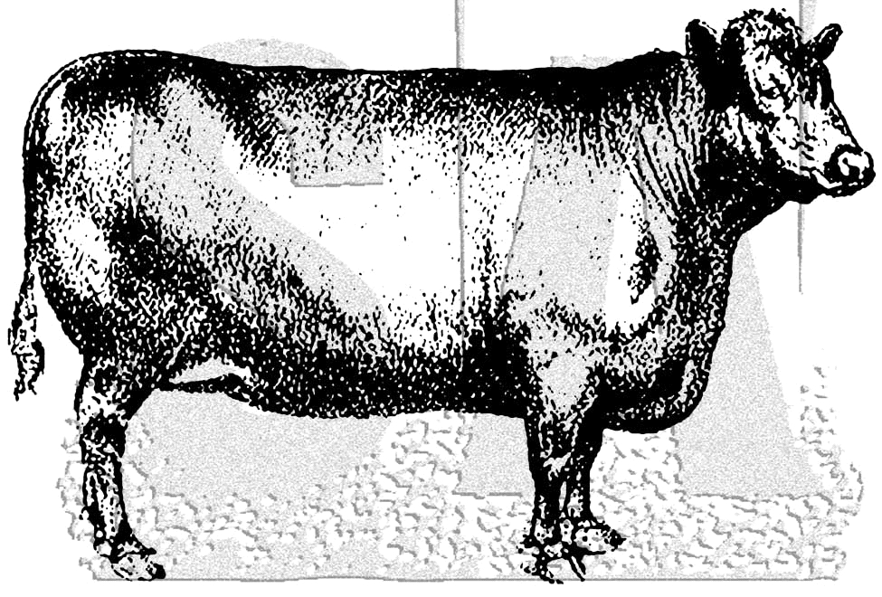 Tim Holtz Rubber Stamp COW Stampers Anonymous M3-3028* zoom image