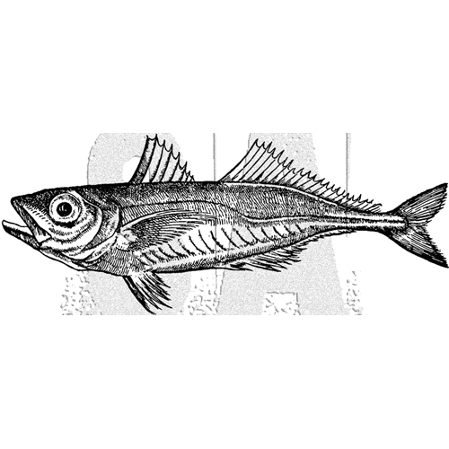 Tim Holtz Rubber Stamp FISH 2 Stampers Anonymous J5-3032 Preview Image