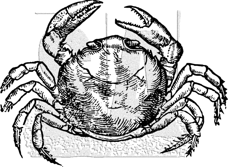 Tim Holtz Rubber Stamp CRAB Stampers Anonymous K1-3034 zoom image