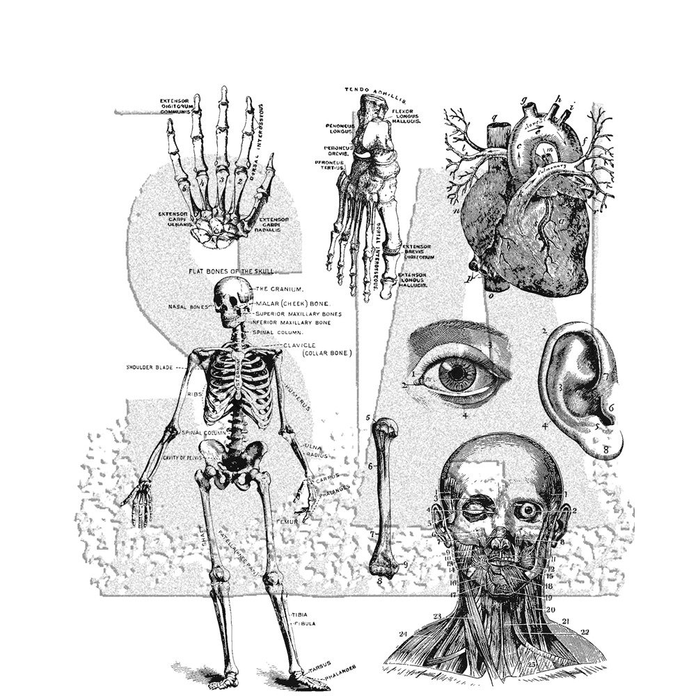 Tim Holtz Cling Rubber Stamps CADAVEROUS CMS378 zoom image