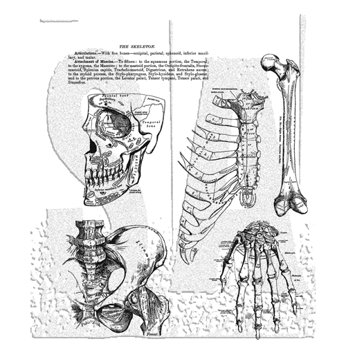 Tim Holtz Cling Rubber Stamps 2020 ANATOMY CHART CMS411 Preview Image