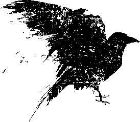 Tim Holtz Rubber Stamp SCRATCHED RAVEN Bird Halloween Stampers Anonymous P1-1454 zoom image