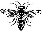 Tim Holtz Rubber Stamp BEE E1-1534