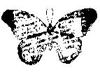 Tim Holtz Rubber Stamp GRUNGEFLY Butterfly Stampers Anonymous E1-1538