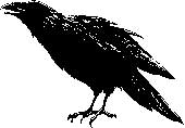 Tim Holtz Rubber Stamp SKETCH RAVEN J1-1564 Stampers Anonymous zoom image