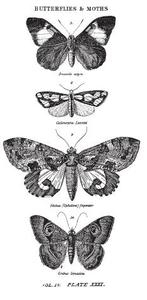 Tim Holtz Rubber Stamp  BUTTERFLIES AND MOTHS 1 p2-1673 zoom image