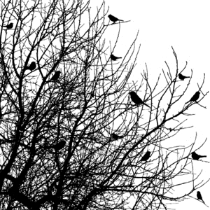 Impression Obsession Cling Stamp BIRDS ON TREES CC102